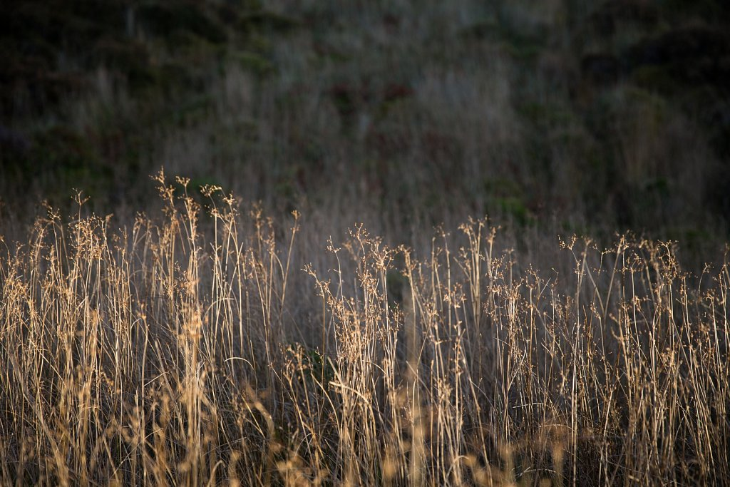 Long Grass, Kerrera