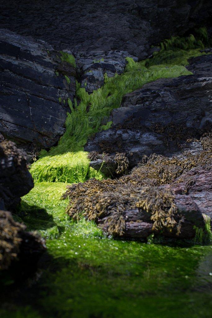 Seaweed, Kerrera