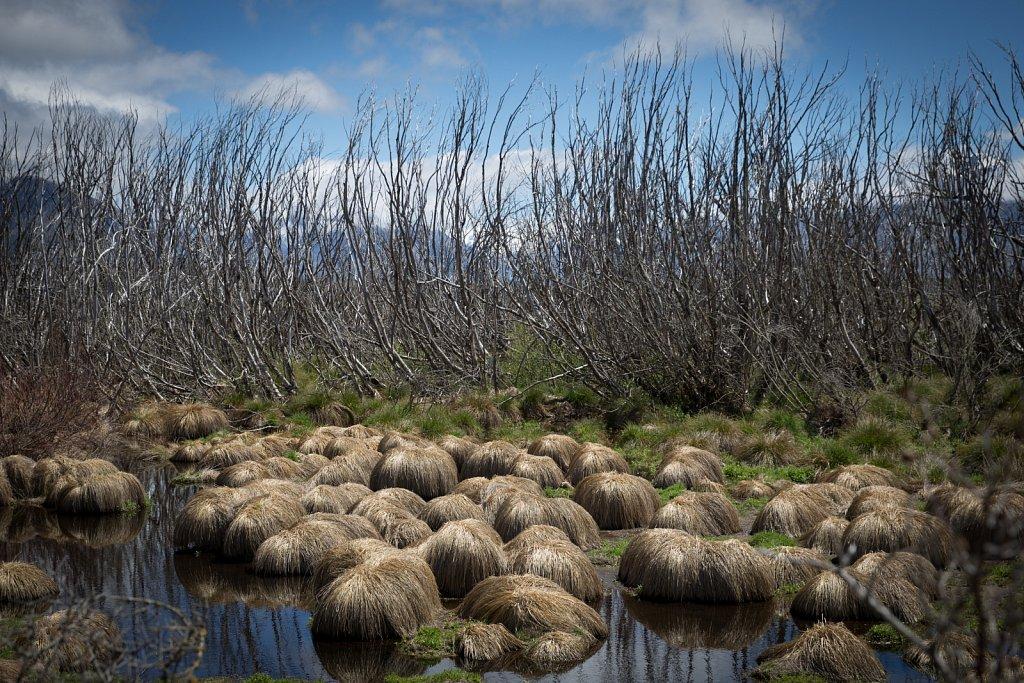 Willow Eradication New Zealand